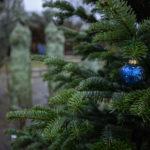 Mehr Nachfrage bei Weihnachtsbäumen: Warum?