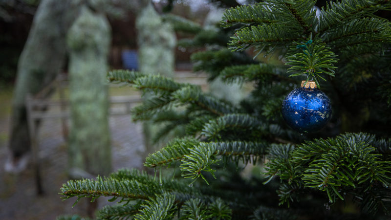 Einen der Weihnachtsbäume hat der Verkäufer mit einigen Christbaum-Kugeln geschmückt.