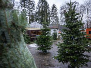Eingepackte und nicht-eingepackte Weihnachtsbäume warten auf Abnehmer in Angelmodde.