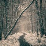 Münster fällt kranke und abgestorbene Bäume bis Ende Februar