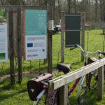 Wald-Exkursion in die Davert in Rinkerode