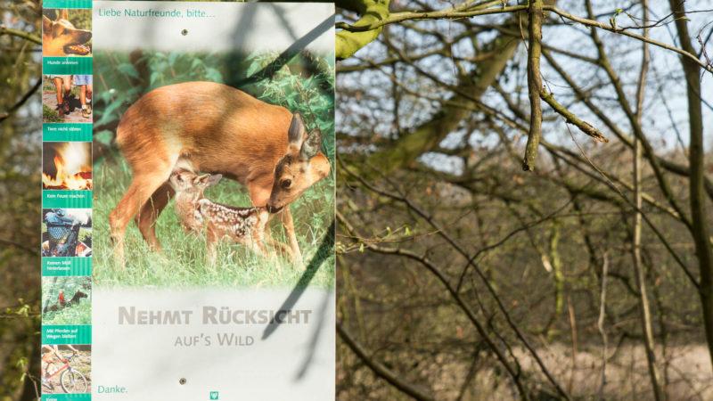 Plakat in der Davert, zeigt Reh mit Kitz. Foto: A. Hasenkamp.