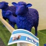 Jubiläums-Schulfest an der Friedensschule Münster lockt viele 30