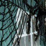 Halloween-Party zum Gruseln: Stadthalle voll seltsamer Gestalten