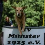 """""""Tag des Hundes"""" beim Hundesportverein MV Münster 1925"""