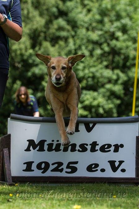 """""""Tag des Hundes"""" beim Hundesportverein MV Münster 1925 2"""