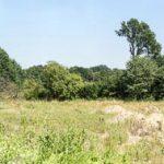 Blick vom ehemaligen Lancier-Gelände in Richtung Tiergarten und Albersloh