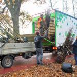 900 Obstbäume für Münsters Kleingärten