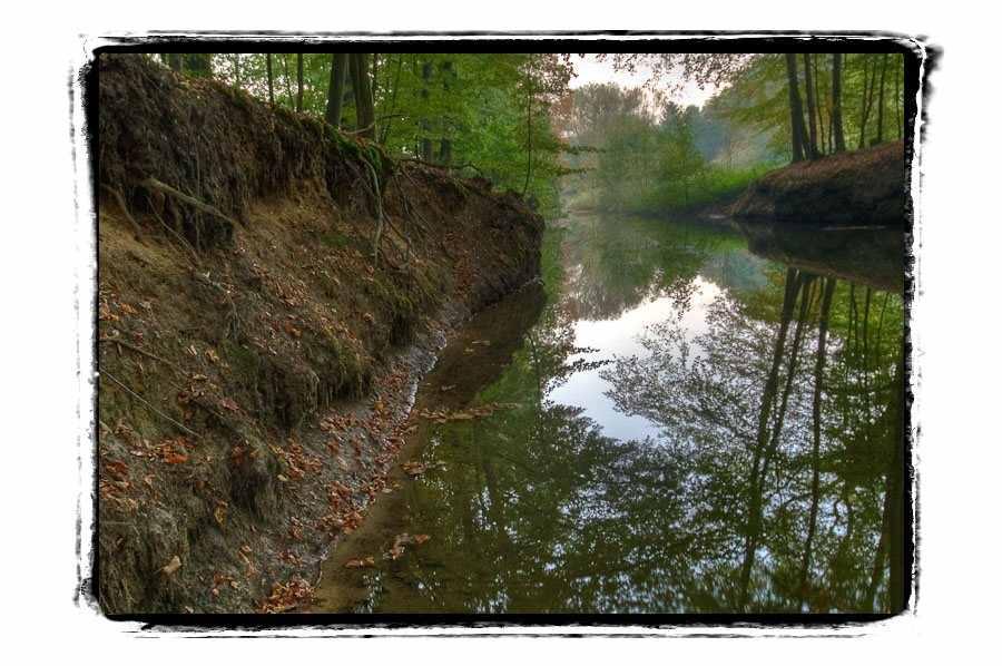 Wolbecker Tiergarten komplett unter Naturschutz