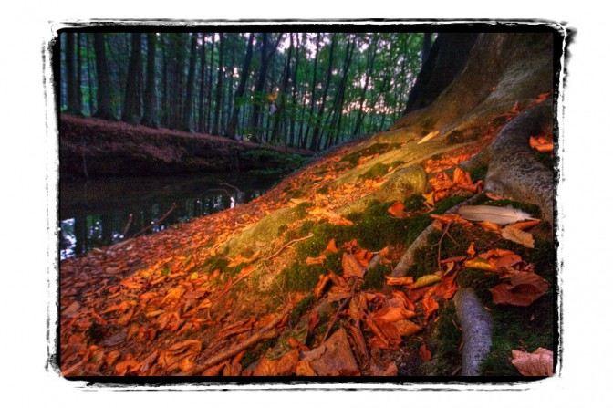 Tiergarten Wolbeck 22