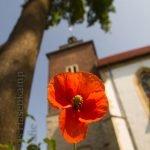 Vor der Bischofskonferenz: Über sexuellen Missbrauch, Zölibat und Austritte