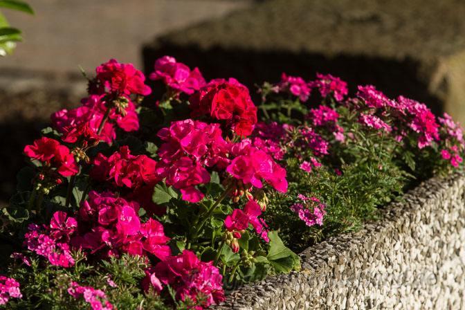 Blumenschmuck in Wolbeck