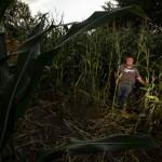 Landwirte an der Holtrode beklagen Schäden durch Kinder